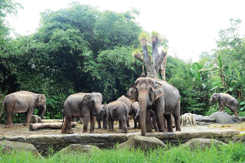Best Hotels Near Indonesia Safari Park Cisarua - TripAdvisor